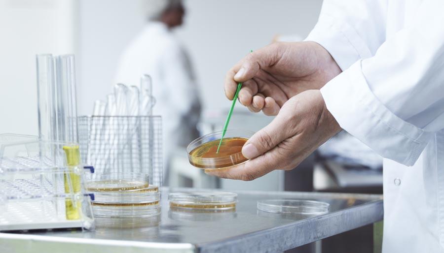 Man interacting with a petri dish