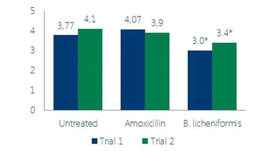 Probiotic supplementation leads to lower coccidian lesion scores, Figure 1