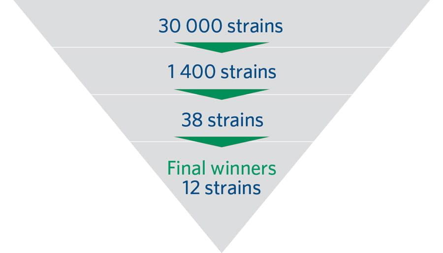 Raising the bar infographic