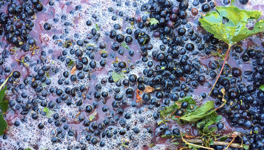Grapes in grape juice