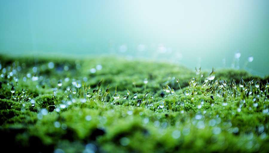 Капли дождя на траве