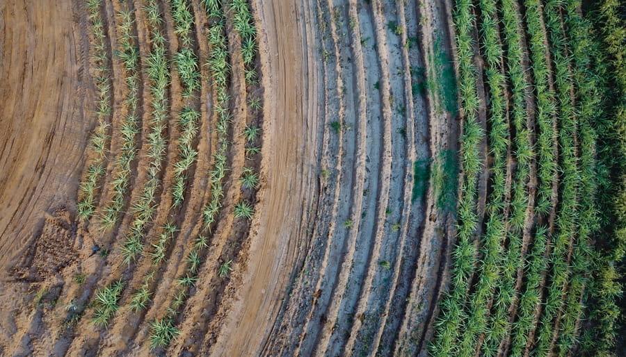 Foto aérea de cultivos