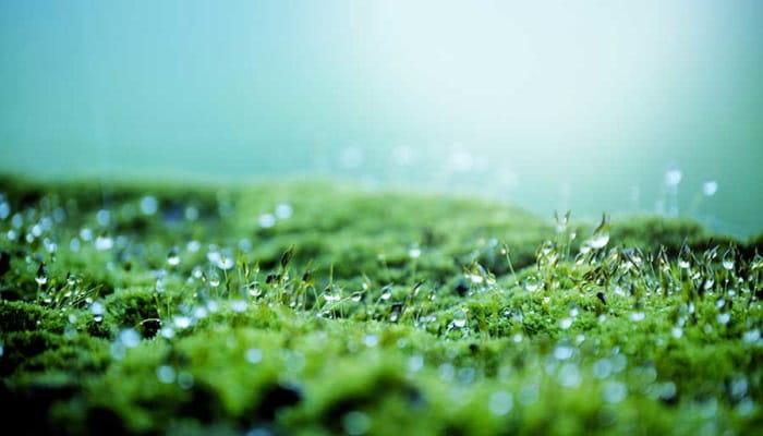 Chr. Hansen continues strong momentum: 10% organic growth in Q2